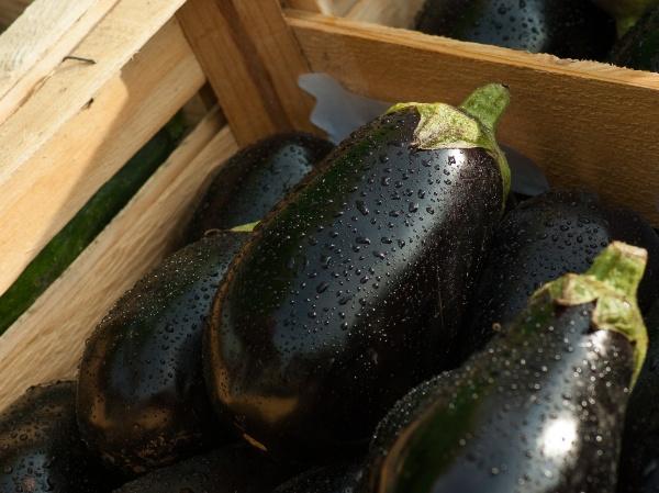 eggplant-1707629_1920 (1)_0.jpg