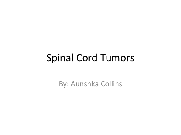 spinal cord.png