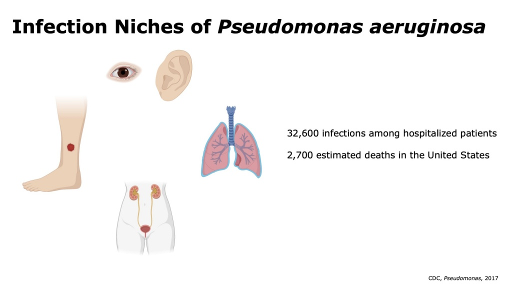 Characterizing Clinical Pseudomonas Samples