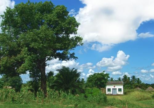 vigh_under_shade_tree_sm-e1398452015313.jpg
