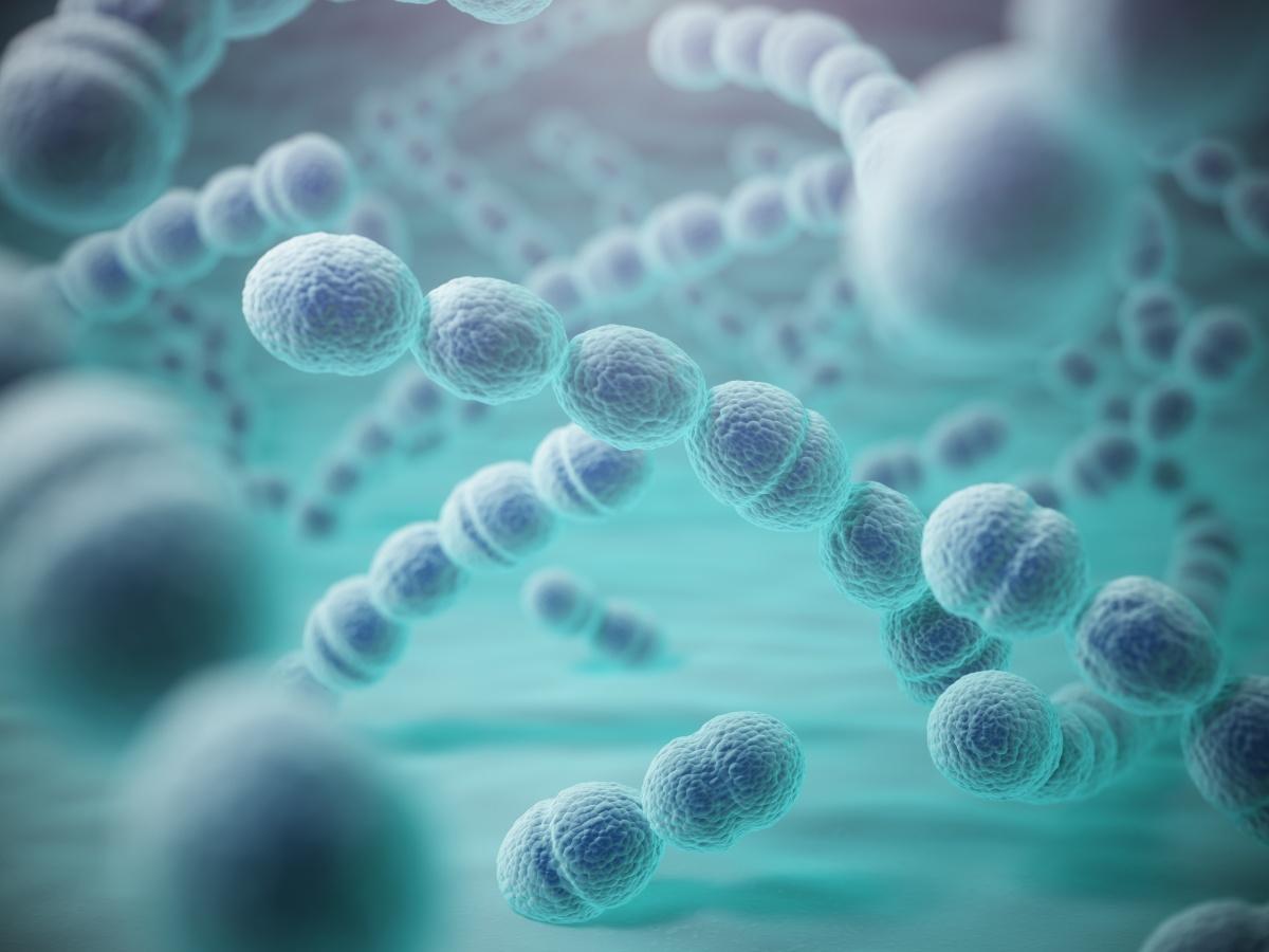 3D image of streptococcus pneumoniae bacteria