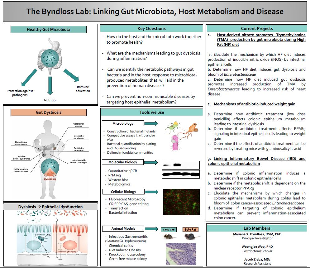 The Byndloss Lab: Linking Gut Microbiota, Host Metabolism and Disease