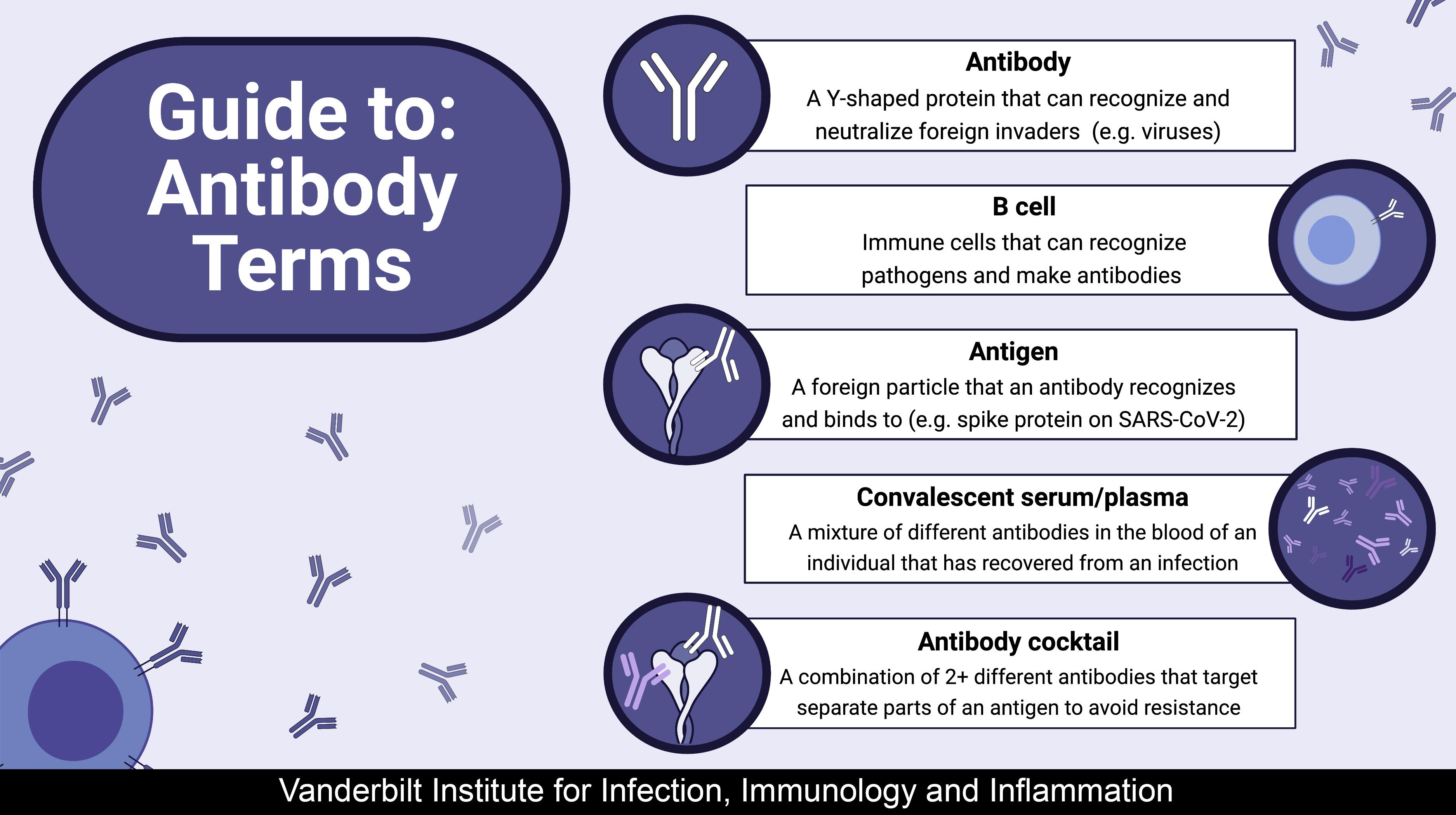 Guide to: Antibody Terms