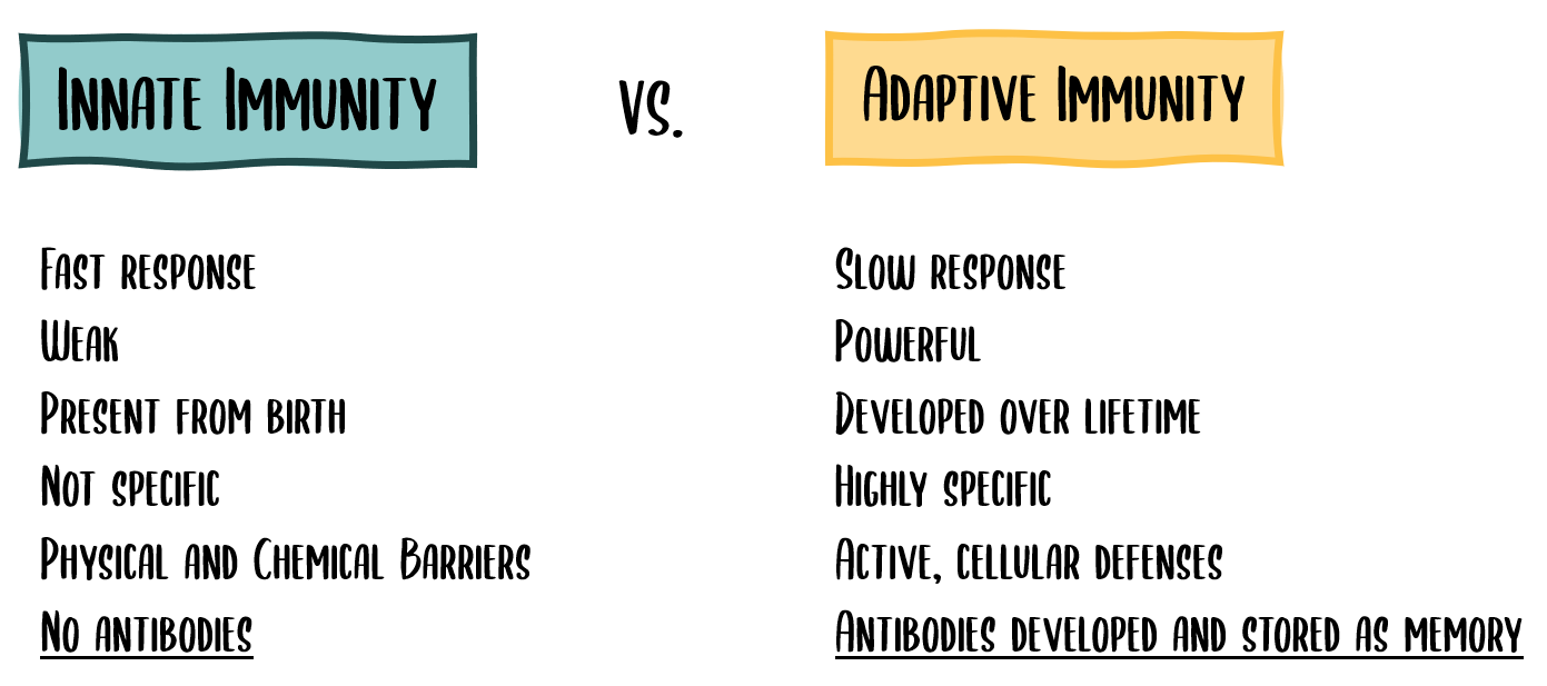 Innate Immunity vs. Adaptive Immunity
